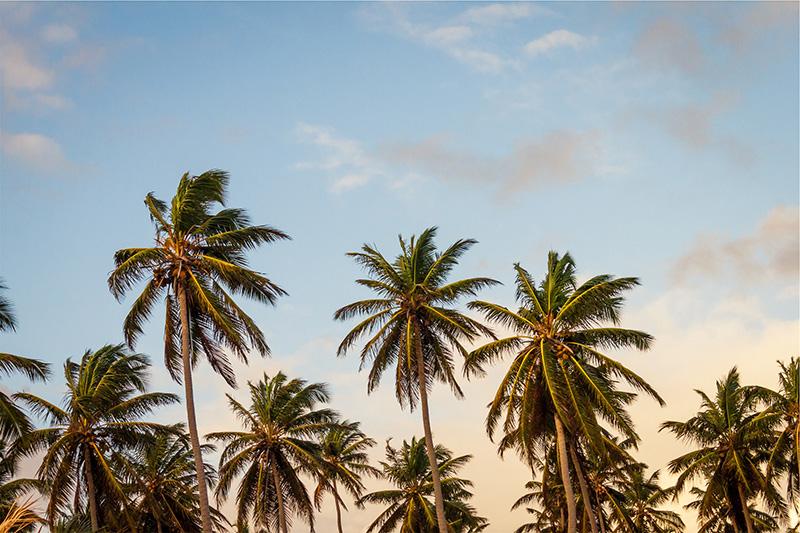 yogini under a palm tree