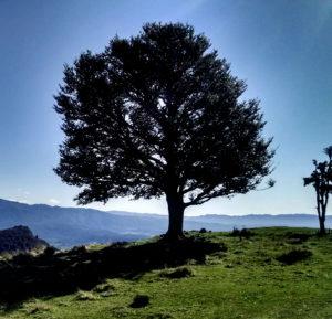 "Explore Your ""Self"" Yogic Lifestyle Retreat @ Anahata Yoga Retreat | Clifton | Tasman | New Zealand"