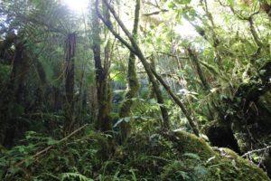 Ovio Mindfulness beginners course @ Ovio studio Karori  | Wellington | Wellington | New Zealand